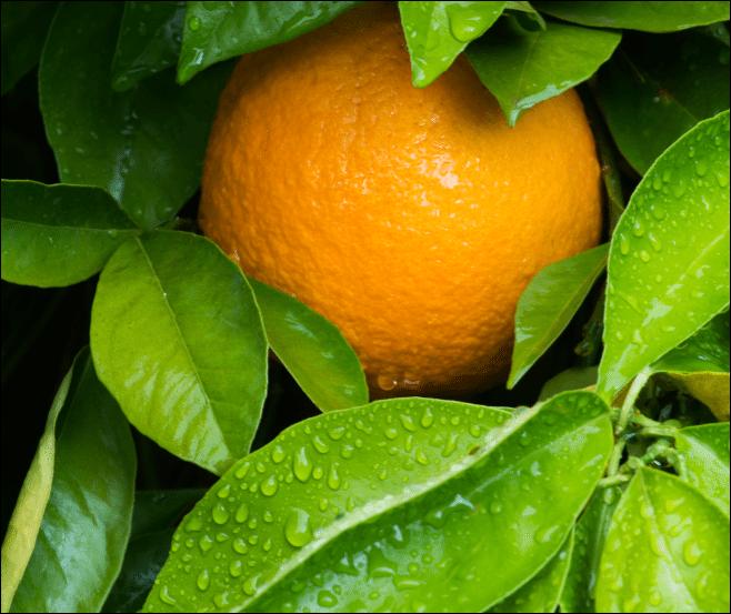 哈萨克斯坦暂时限制从中国进口柑橘类水果
