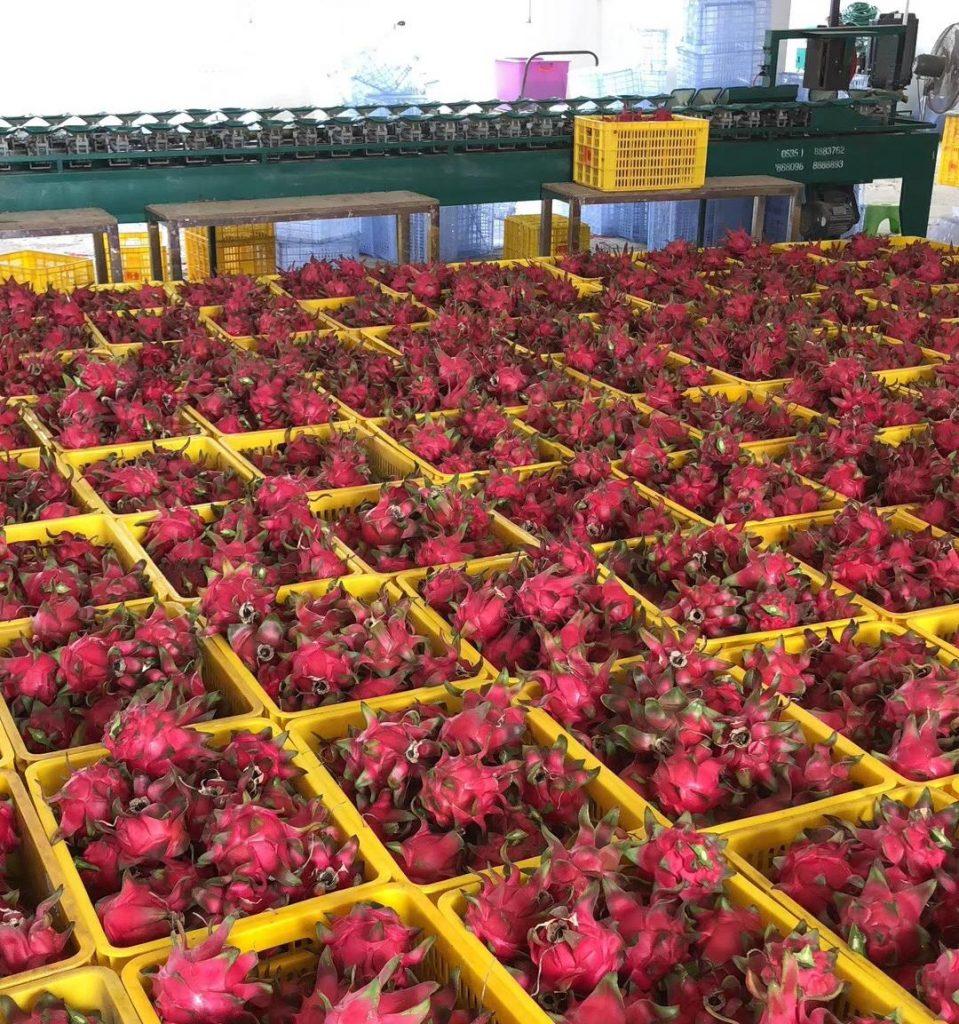越南水果对华出口受重创,未来将有更多通过铁路出口中国