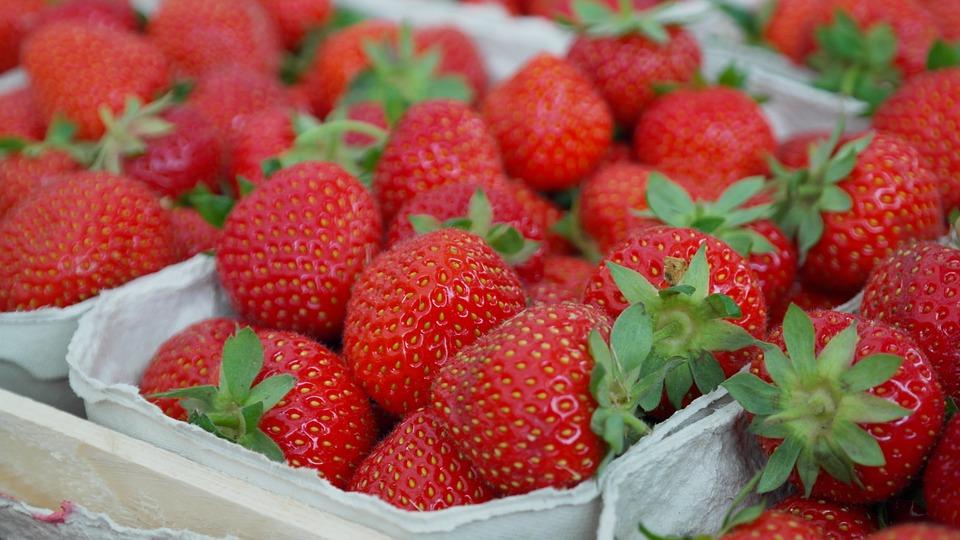 物联网技术助力草莓产量翻番