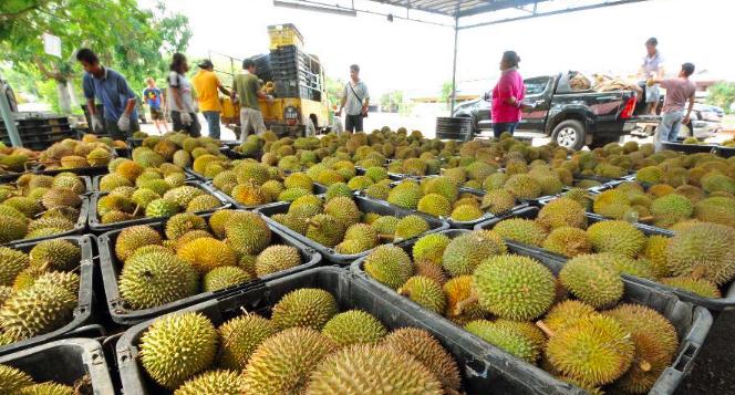 泰国水果预计增产12%,榴莲产量约55万吨