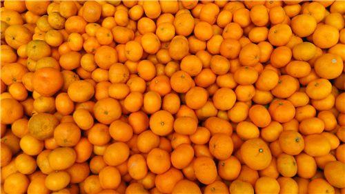 本季度摩洛哥柑橘产量将减半