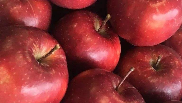 双节临近,国内苹果市场现回暖迹象