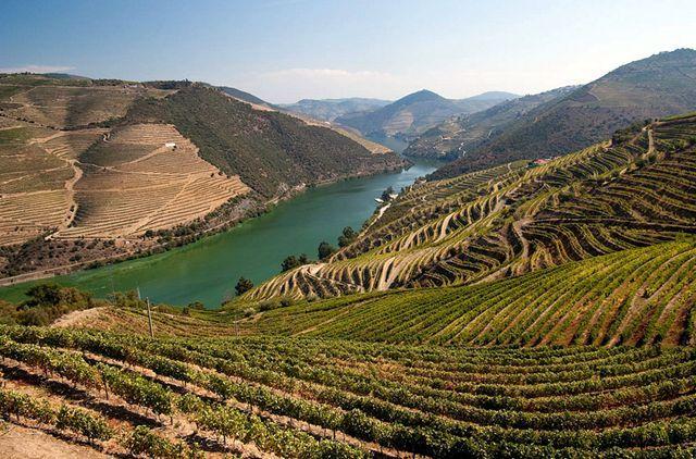 预计今年智利食用葡萄、苹果和梨减产