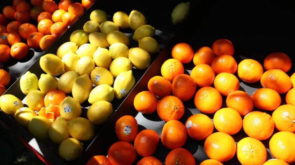 欧洲暂停阿根廷柑橘类水果进口